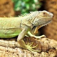 Reptilescu